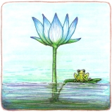 The Lotus and the Frog